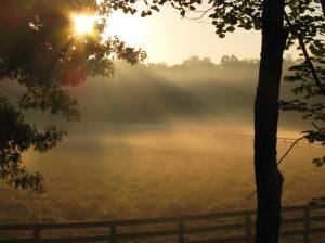 Sun misty farm